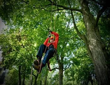 Tree Climbing in Big Bear