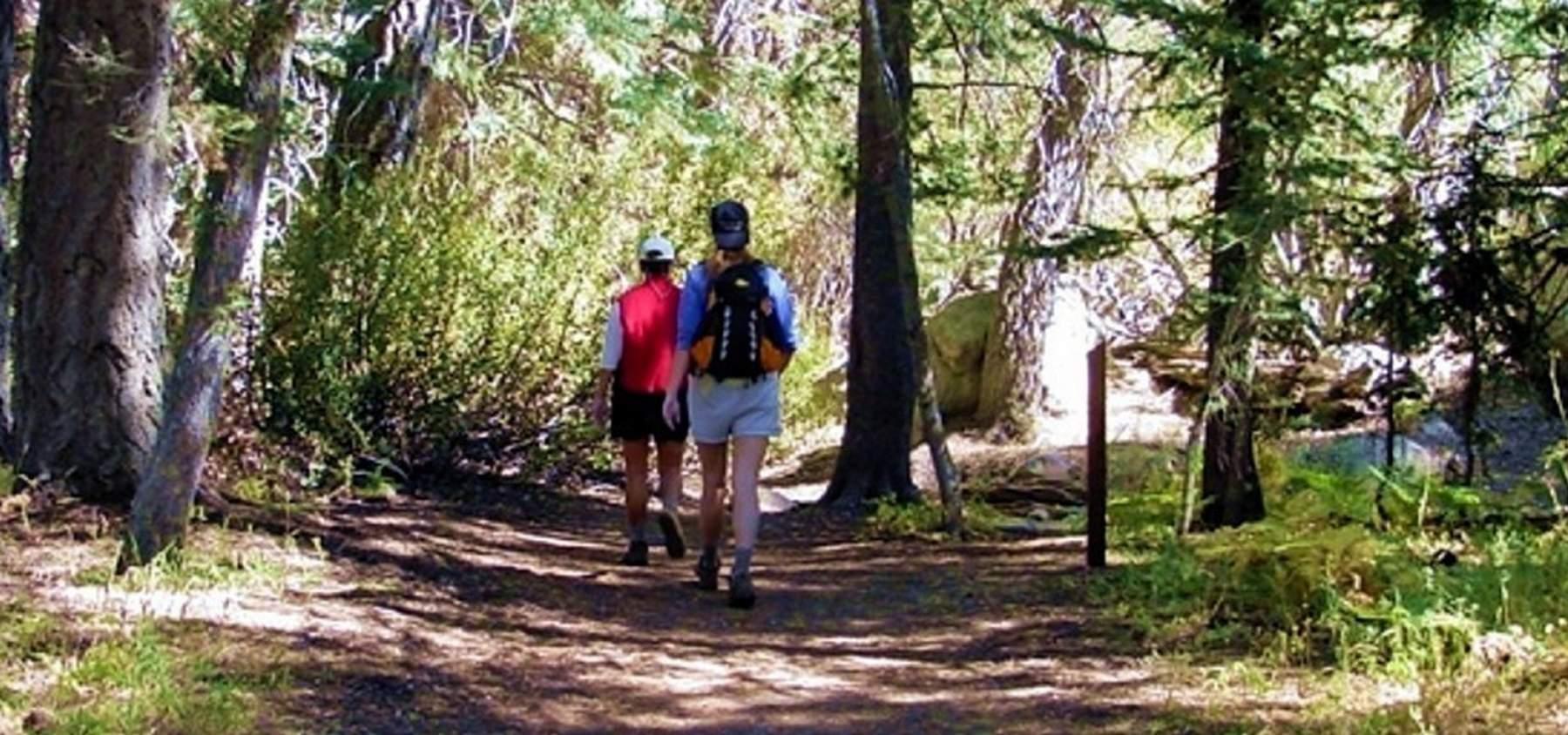 100 Cabin For Backyard Cabin Inhabitat Green Design