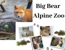 Visit the Big Bear Alpine Zoo