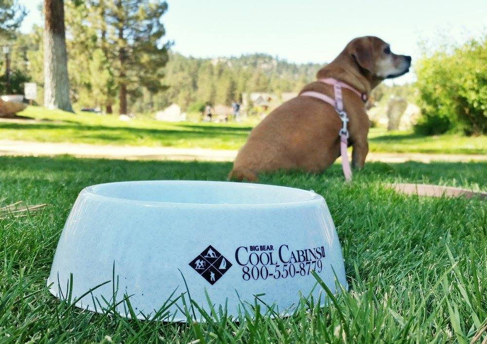 Photo Share, Facebook, Photography, Big Bear, Pet-friendly, dogs, Cool